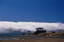 fogbank at nick's cove